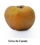Grise du canada